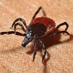 Lyme disease thrives on climate change