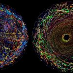 The 8 best scientific images, videos and visualizations of the year