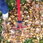 The best way to manage dead leaves