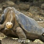 Lonesome George's genes could reveal the secrets of longevity